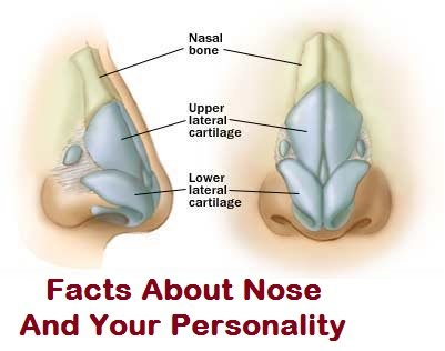 Facts About Nose And Your Personality