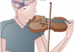 Music training can significantly improve our motor and reasoning skills