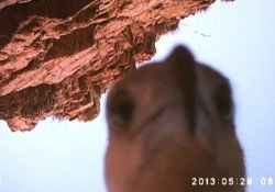 Brazen eagle steals camera, records journey and also shoots a selfie